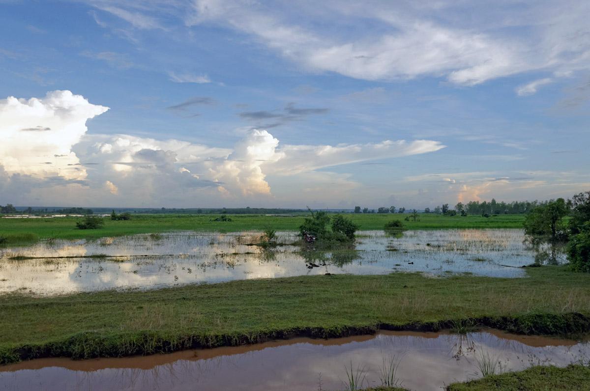 Spectacle de rizières